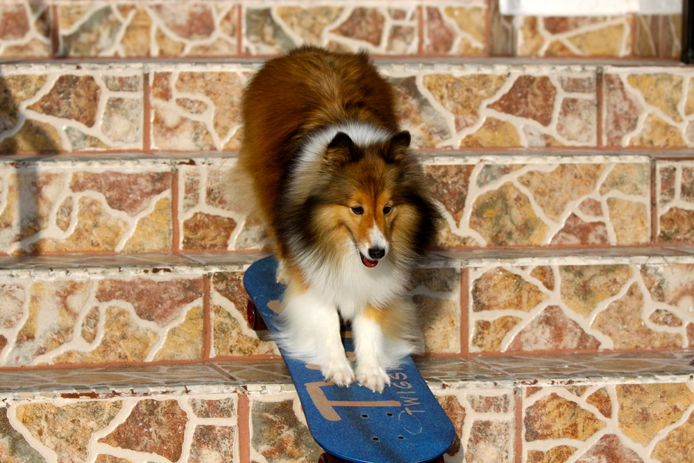 Twig skateboarding down steps.jpg