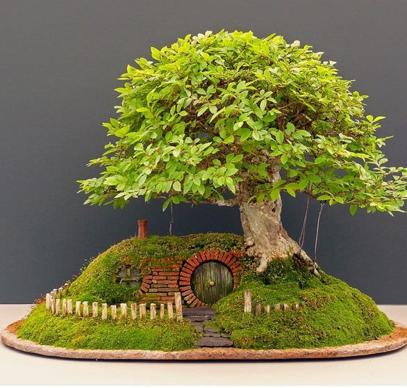Bonsai fairy Garden