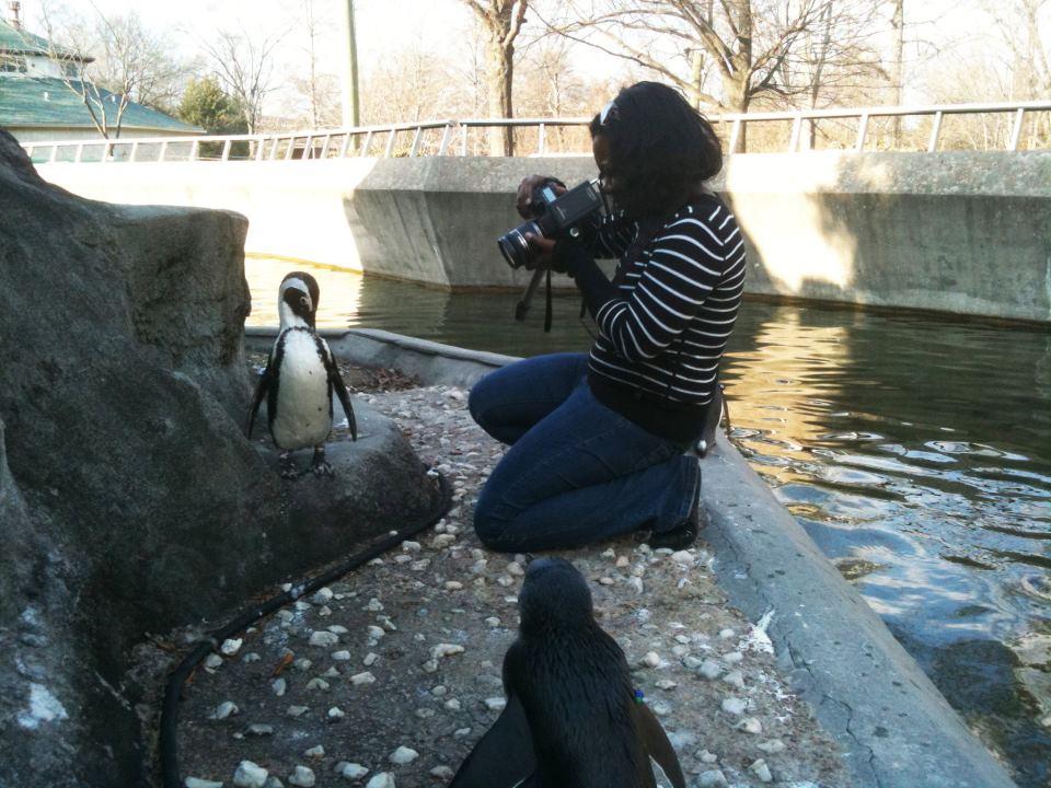 Penguin Rock - Memphis Zoo & Aquarium - Memphis, Tennessee