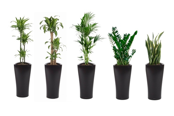 buy live or artificial office plants nationwide delivery