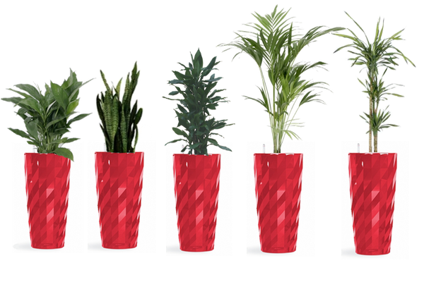 for great value packages to buy all prices include planters plants
