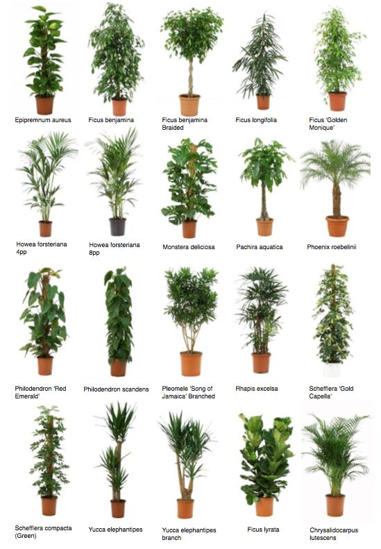 best office plant no sunlight. common office plants 2jpg best plant no sunlight n