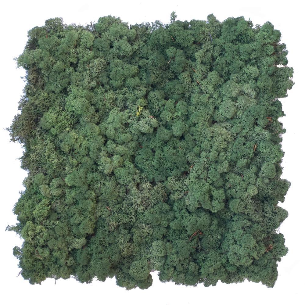 Preserved dark green Reindeer Moss Panel