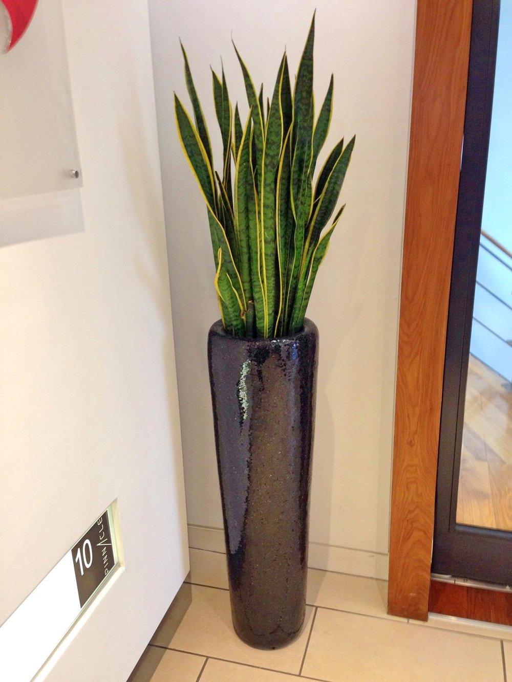 san+tall+planter.jpg