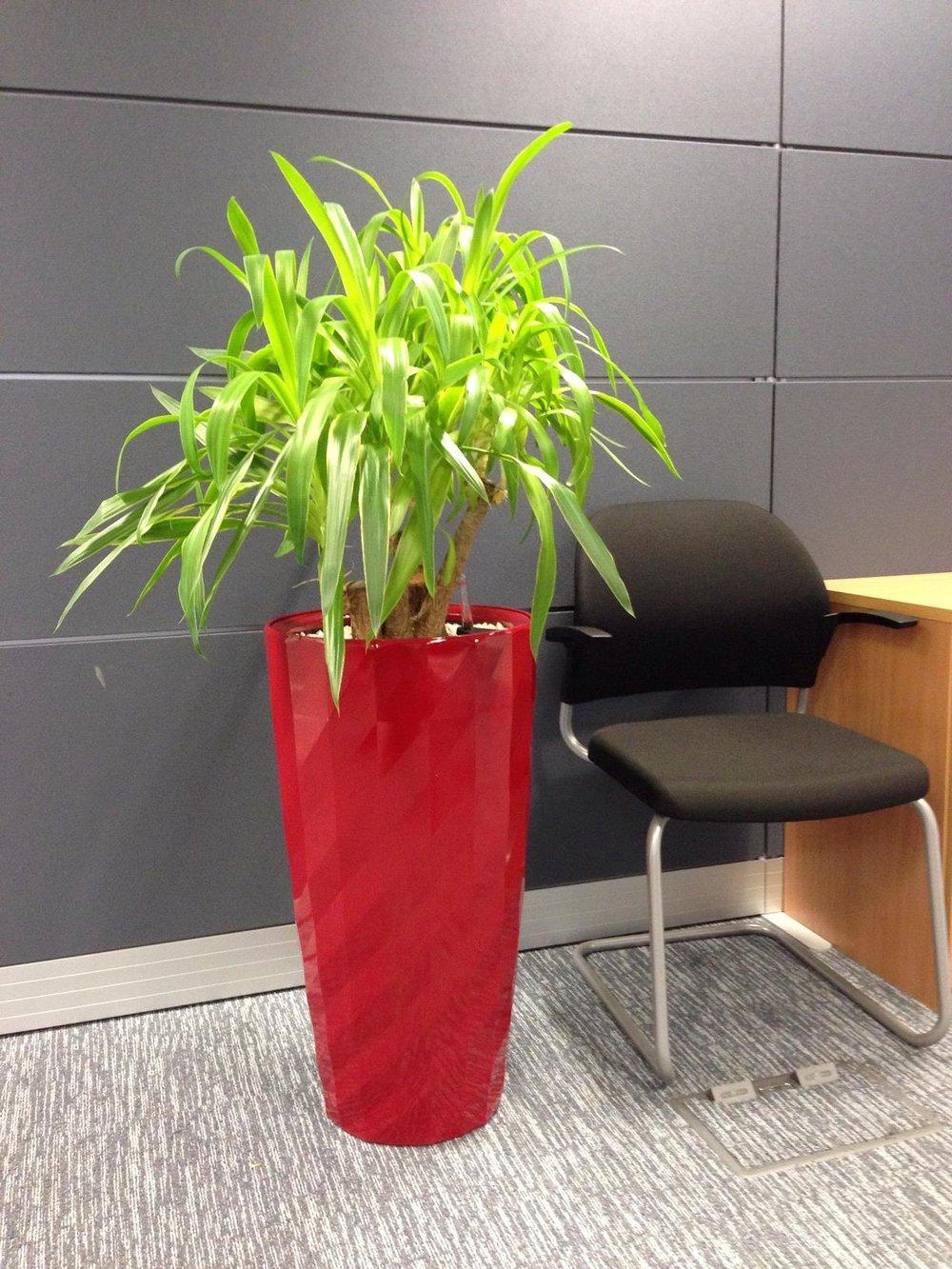 red+yucca.jpg