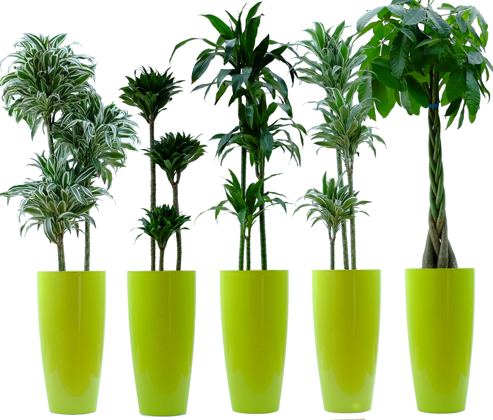 plant-package-green-circ.png