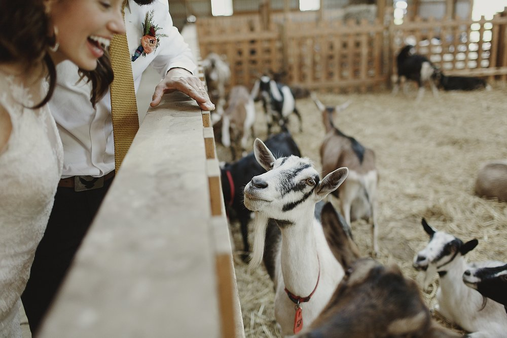 farm-wedding-goats-photo