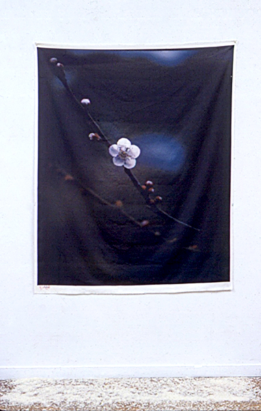 Umi Blossom cc.jpg
