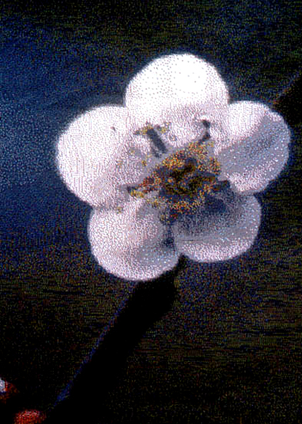 Umi Blossom detail cc.jpg