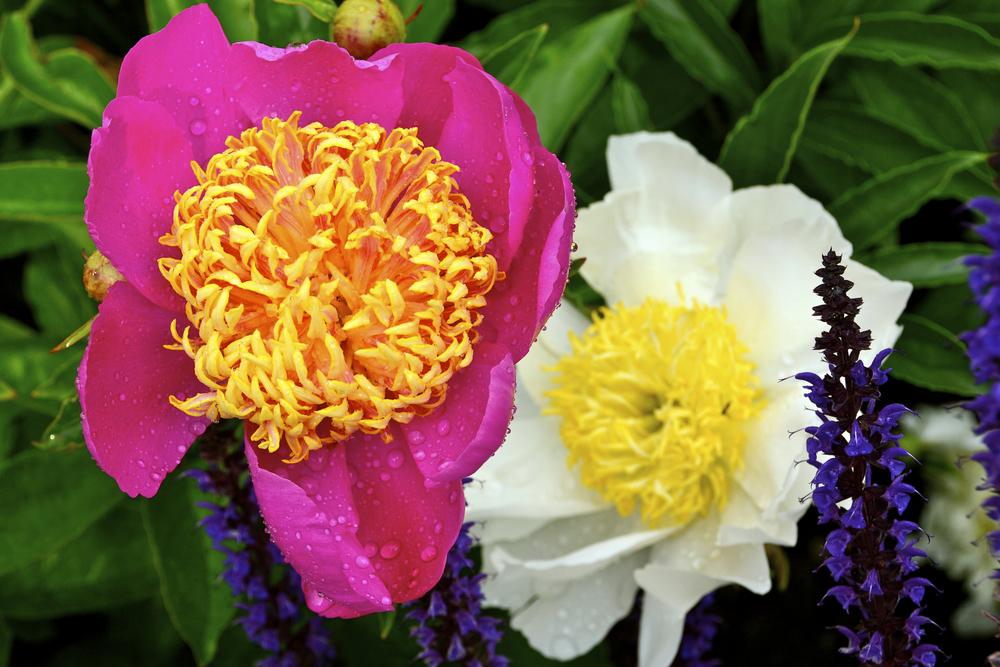 NE_Flowers_002.jpg