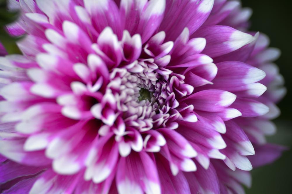 NE_Flowers_011.jpg