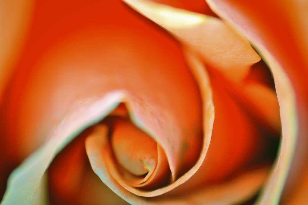 NE_Flowers_019.jpg