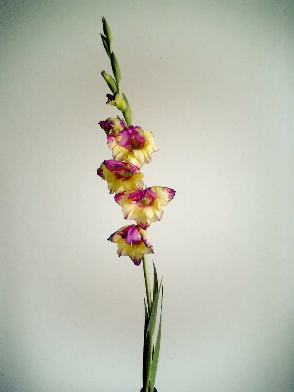 NE_Flowers_024.jpg