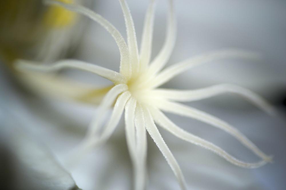 NE_Flowers_028.jpg