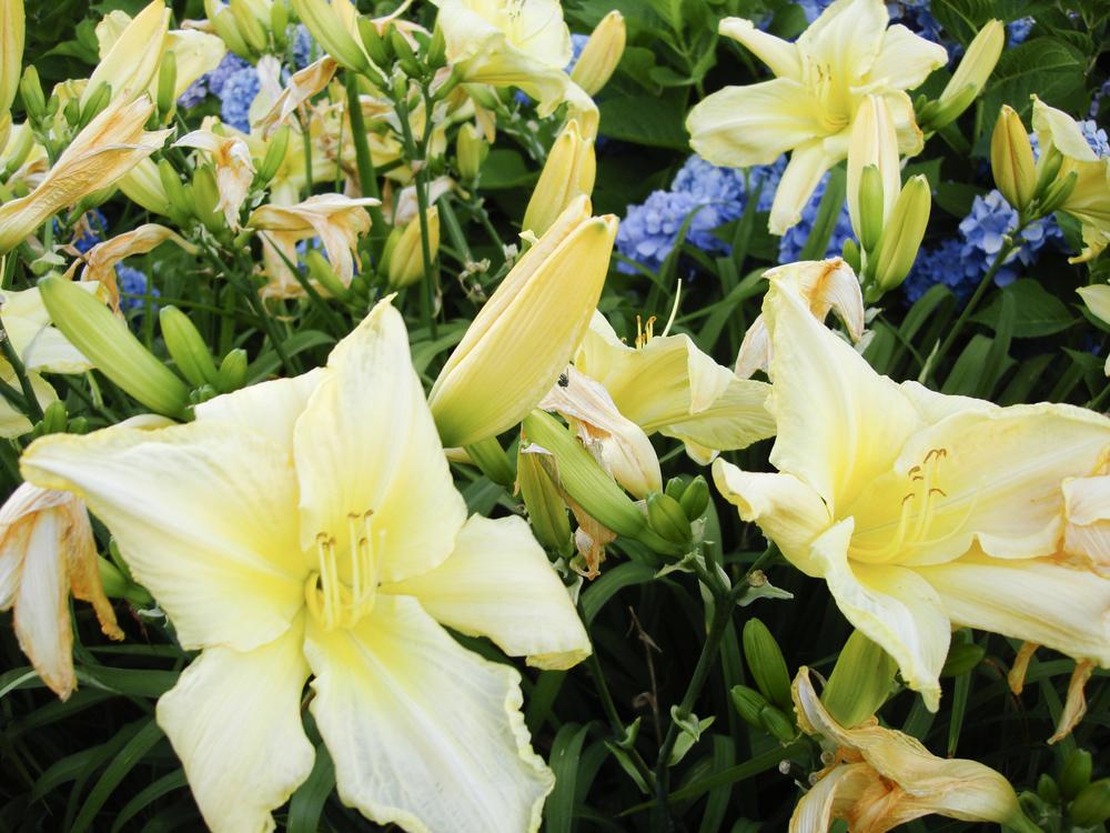 NE_Flowers_031.jpg