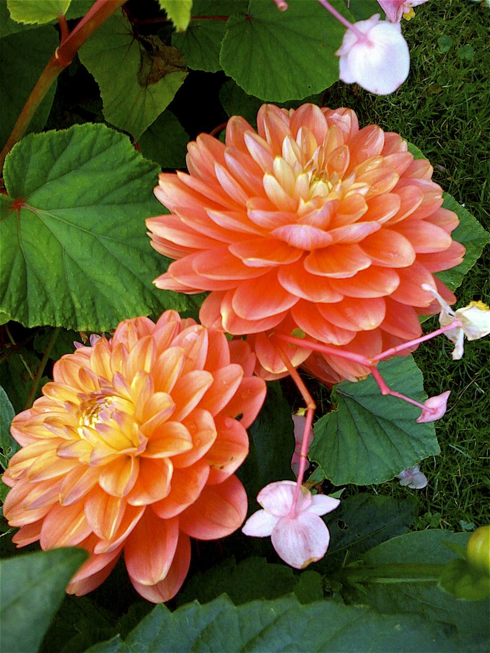 NE_Flowers_038.jpg