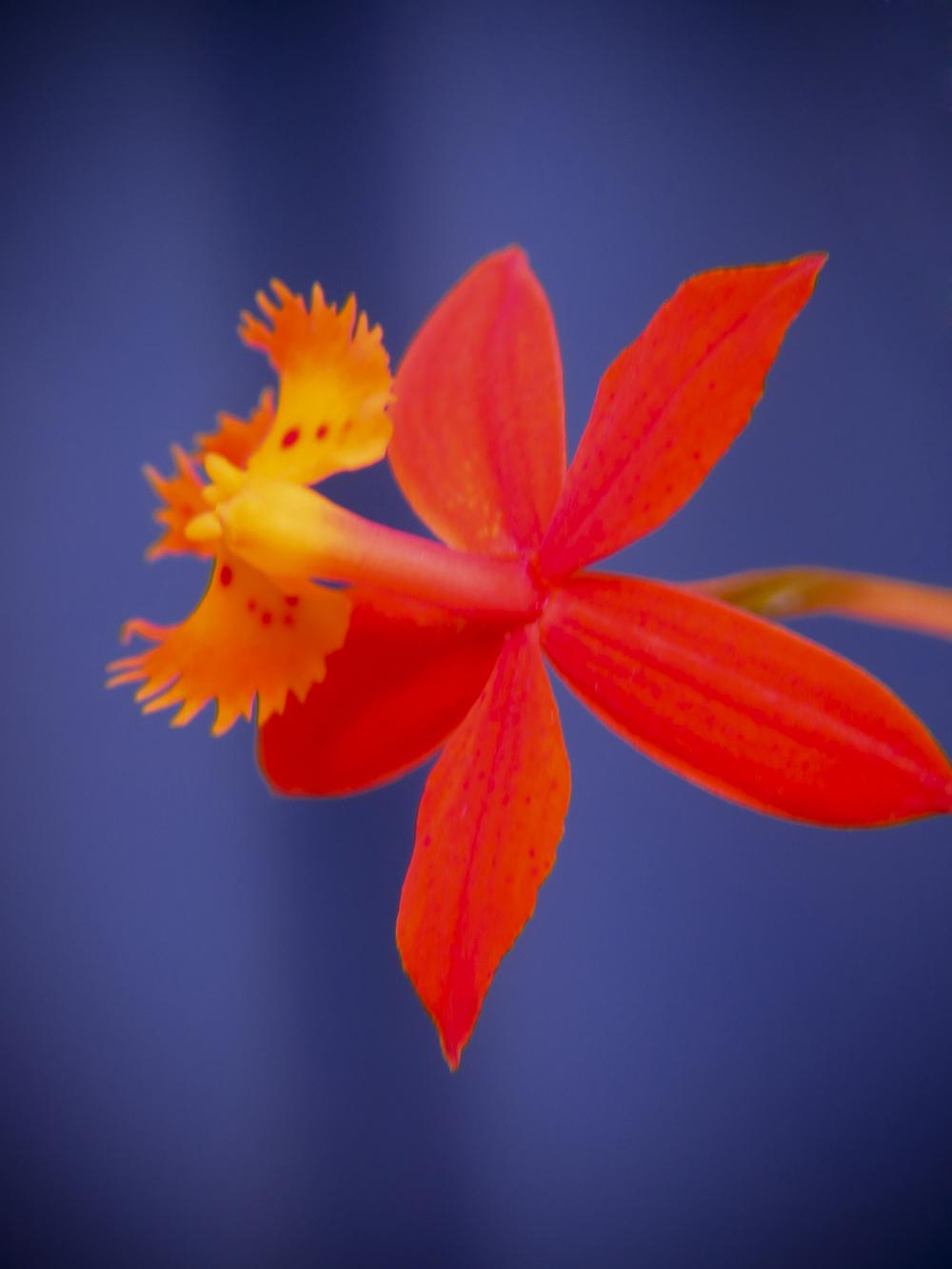 NE_Flowers_054.jpg