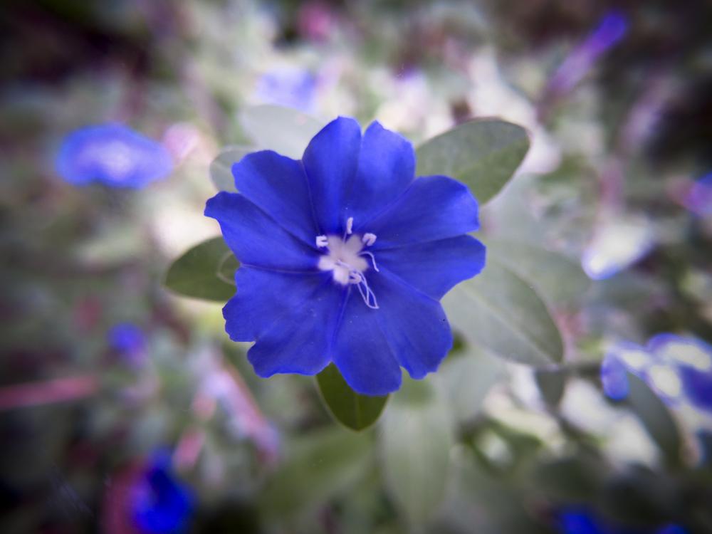 NE_Flowers_055.jpg