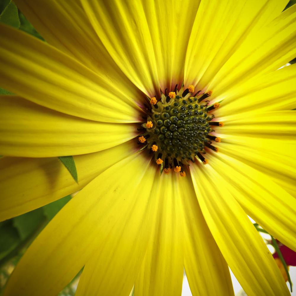 NE_Flowers_061.jpg