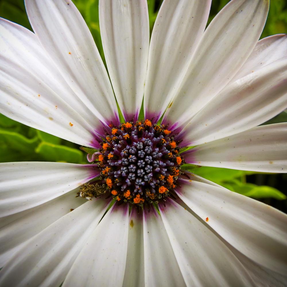 NE_Flowers_062.jpg
