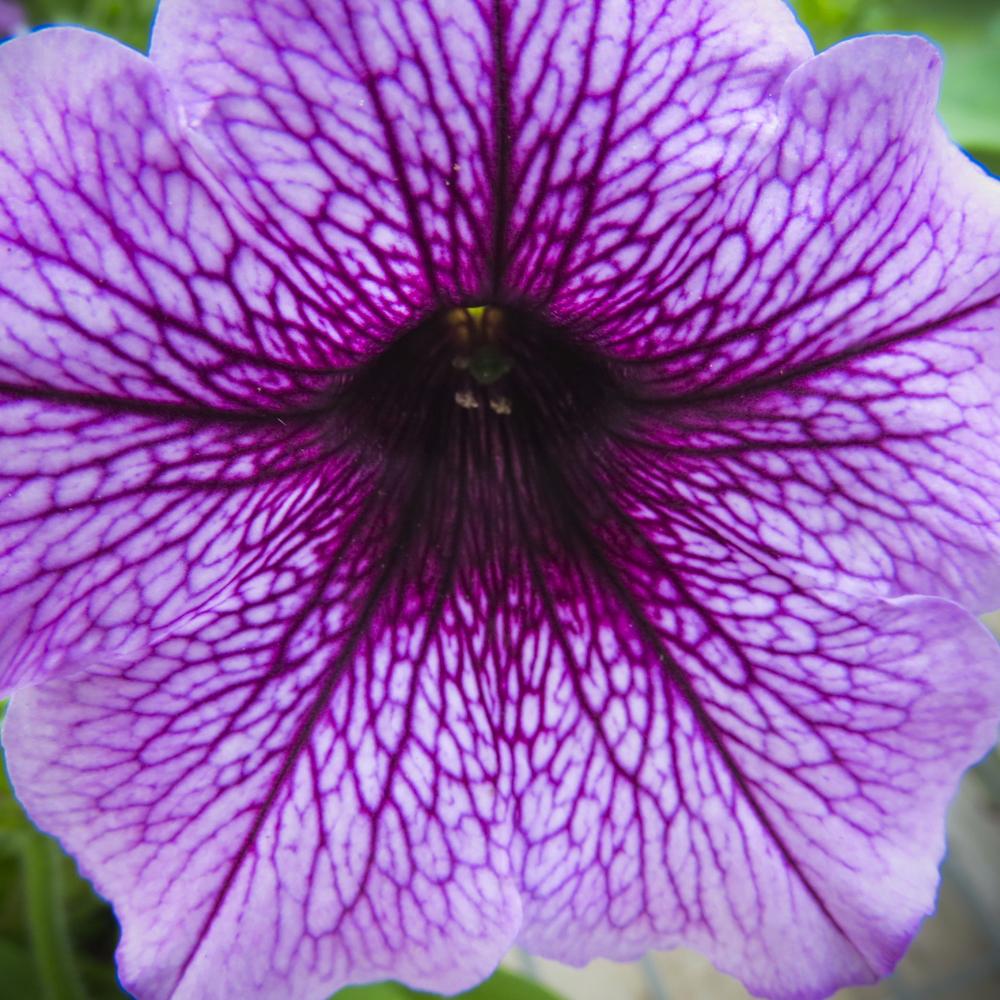 NE_Flowers_063.jpg