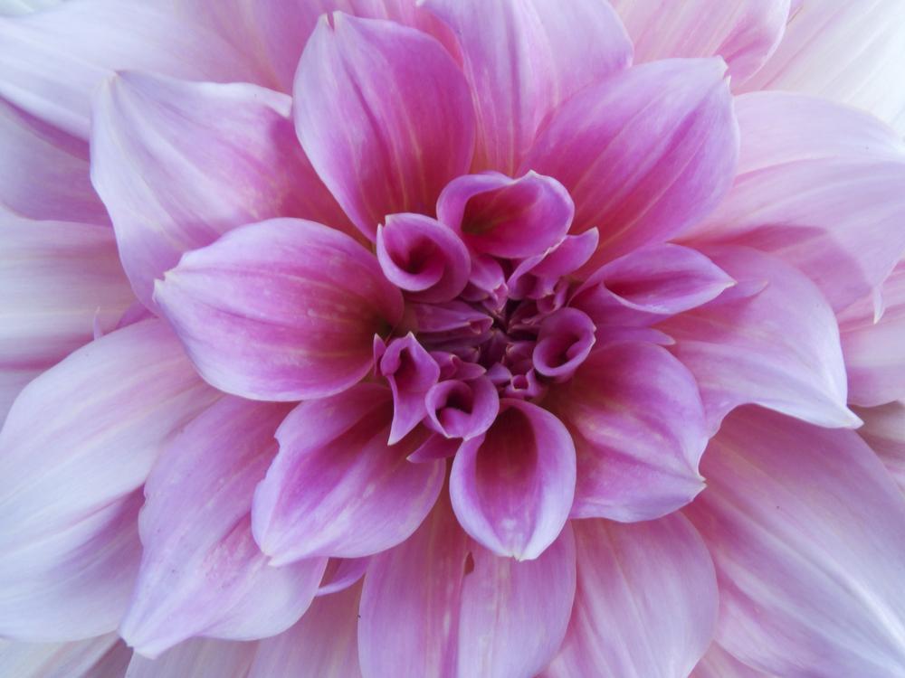NE_Flowers_080.jpg
