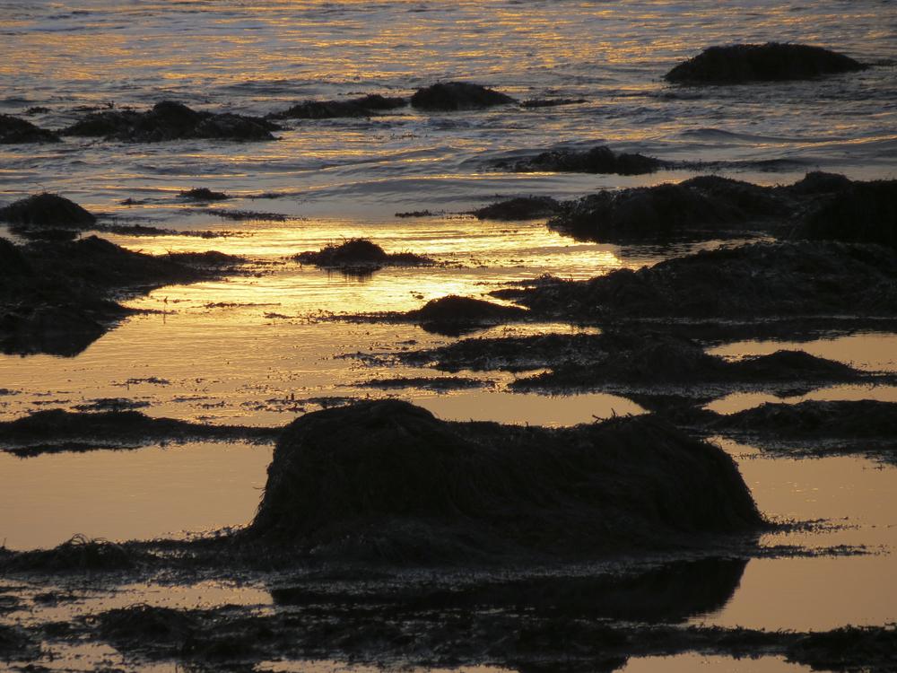 NE_SunsetSkyline_019.jpg