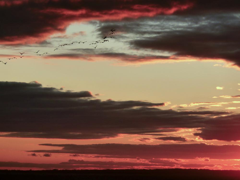 NE_SunsetSkyline_069.jpg