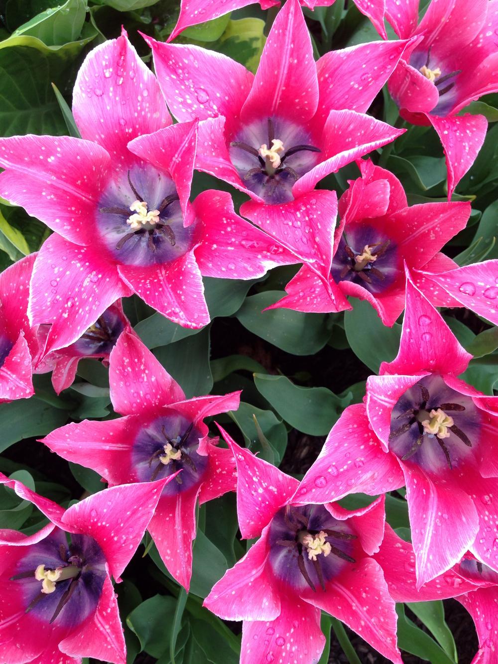 NE_Flowers_084.jpg