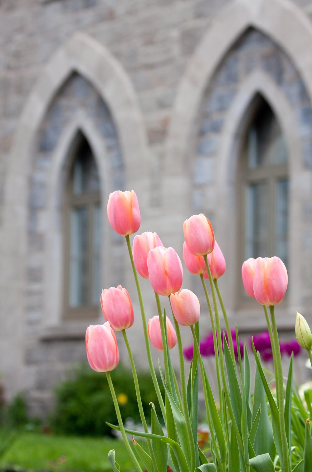 Le printemps au Préau