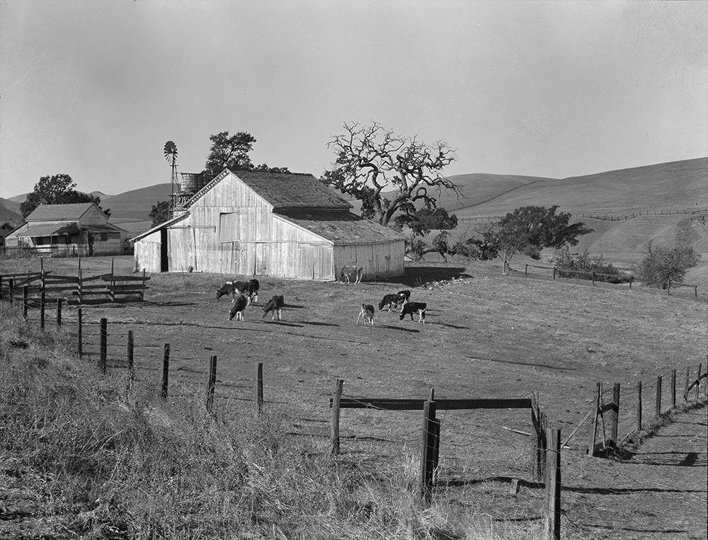 Dorothea-Lange-Small-Farm_CarrieEdit-1000_1024x1024.jpg