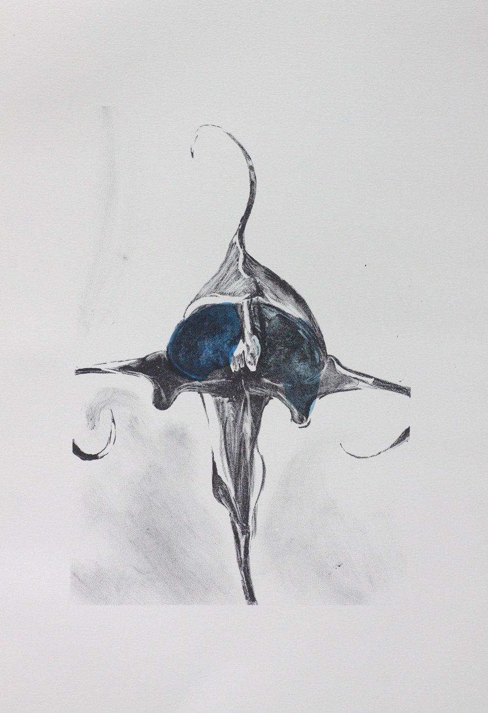 Orchidaceae - Granny Bonnet   Lithograph with indigo-stained chine colle.  35 x 25cm  $350 (UF)