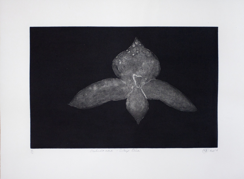 Orchidaceae - Drip Disa   Etching and aquatint. 2016  30 x 40cm