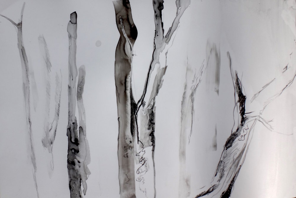 Scribbly Gum I   Sumi, tusche and crayon on yupo  29.5 x 44cm