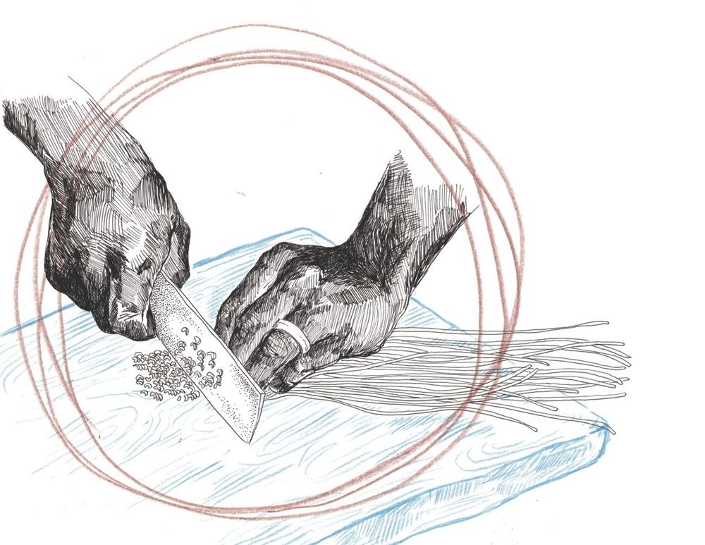 illustration for chickpea magazine