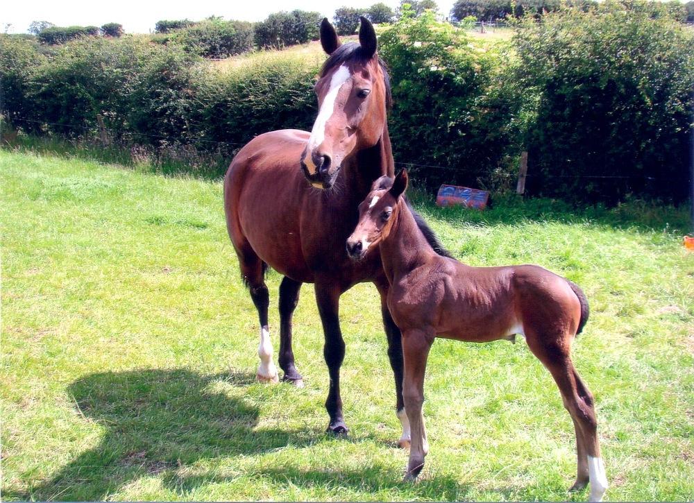 Homebred Foals