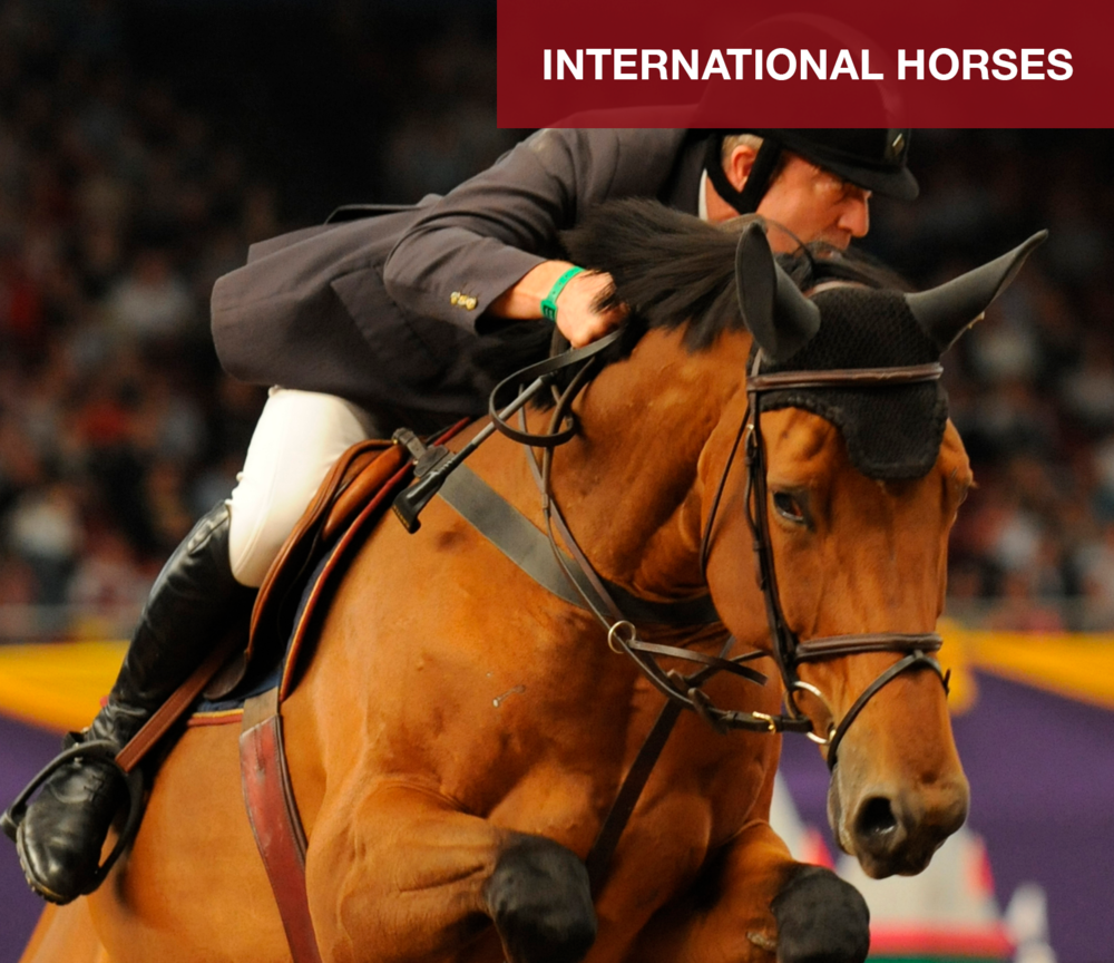 Fairview Farm is a very strong supporter of showjumping and we have a number of horses jumping nationally and internationally with the Fairview prefix, remember to look out for them! FIND OUT MORE...