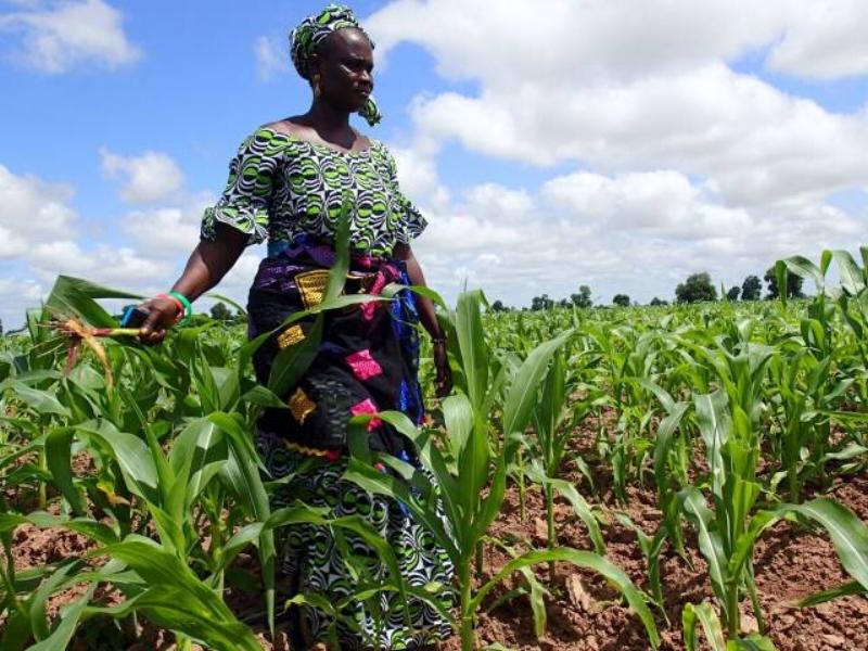 woman-holding-crop_640x480.jpg