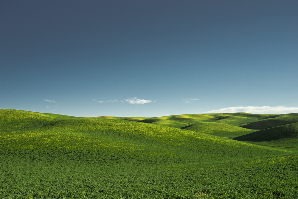 Palouse Green Hills IV