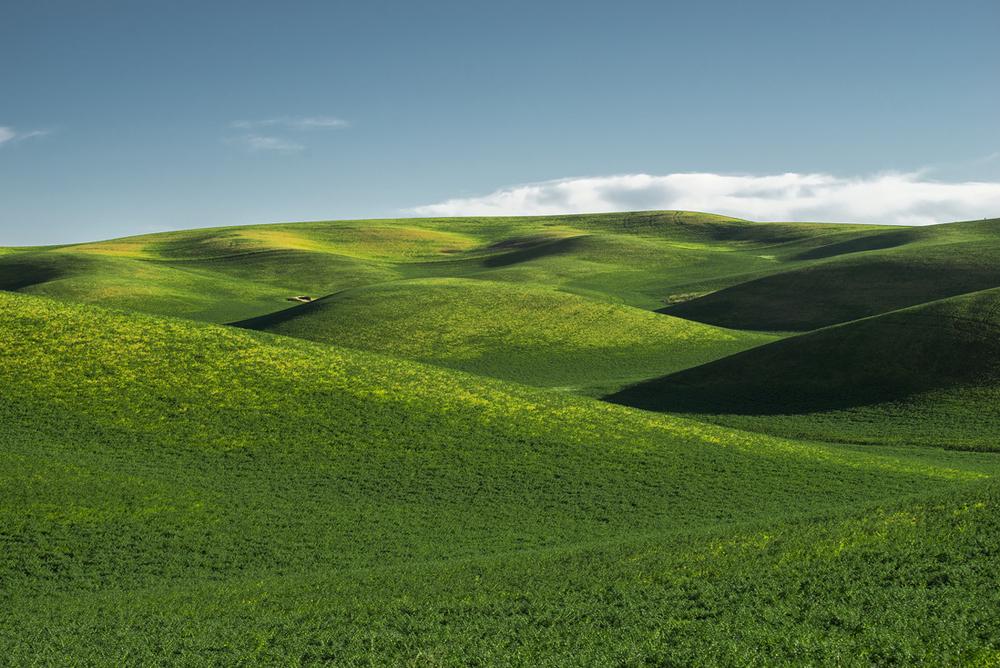Palouse Green Hills III