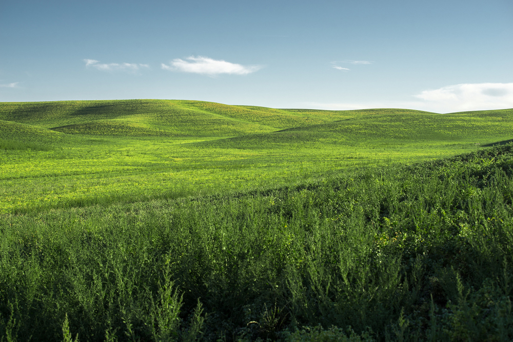 Palouse Green Hills II