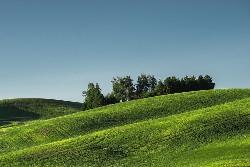 Palouse Green Hills I