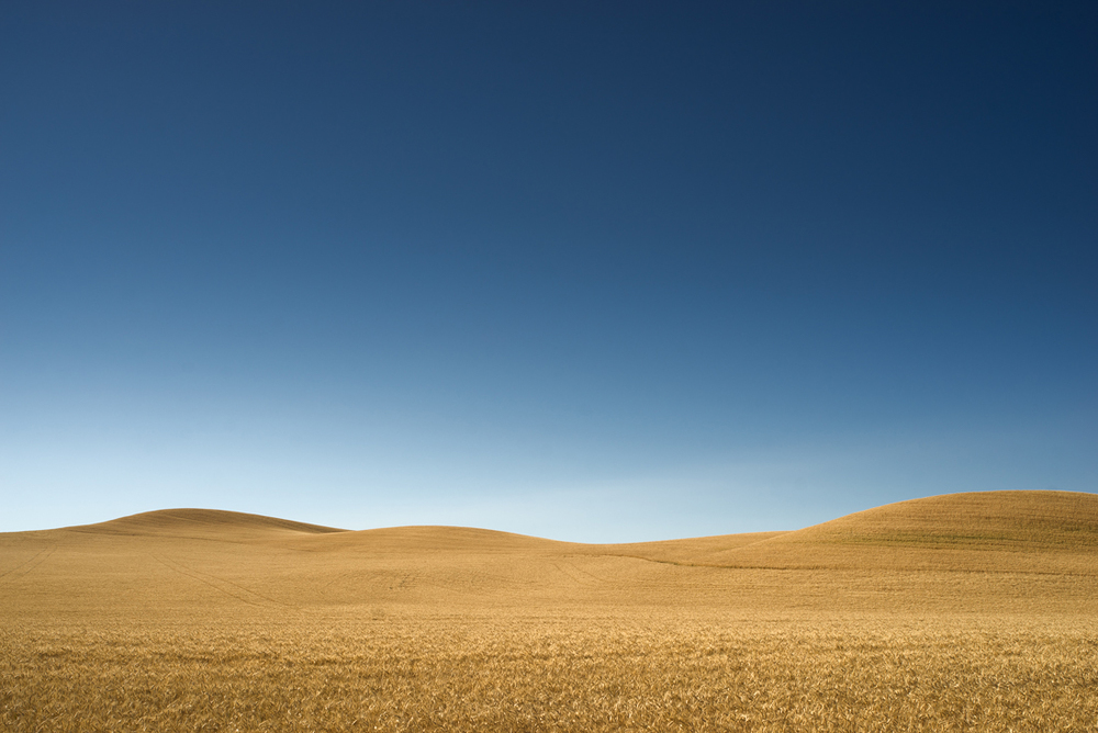 Palouse Golden Hills III