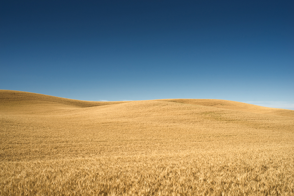 Palouse Golden Hills II