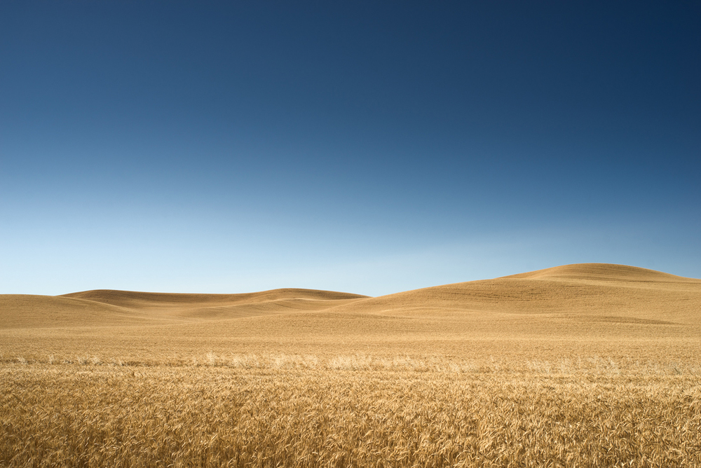 Palouse Golden Hills V
