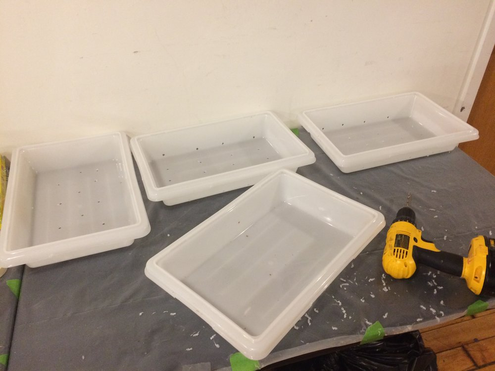 I drilled air holes in these trays to allow oxygen to get to the bottom of the mix. Mycelium likes air but also likes humidity so don't let it get to dry.