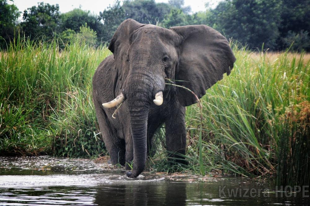 Elephant - Kwizera HOPE.jpg
