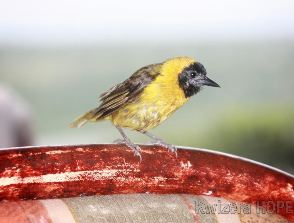 Little Birdie - Kwizera HOPE.jpg
