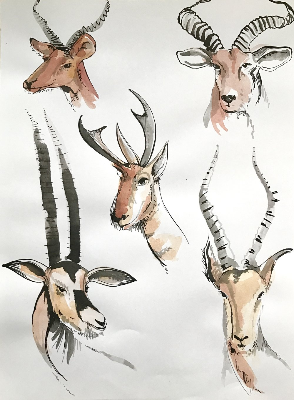 Animal head study (others available)