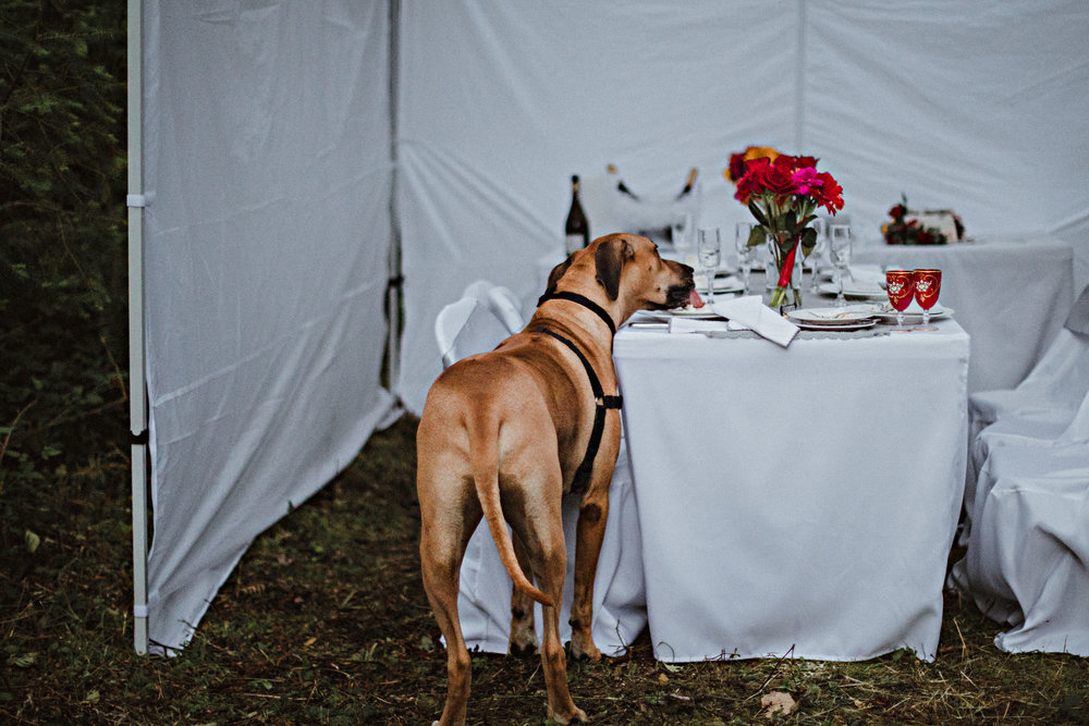 51dogwedding.jpg